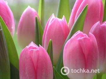 Привітання з Днем Перемоги 9 Травня вірші, квіти