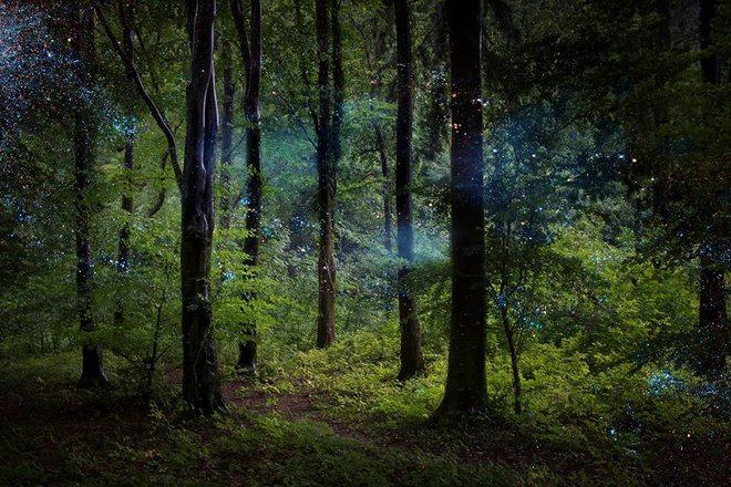 Фантасмагорический лес в Англии