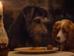 """Відео дня: Леді, Блудько та спагетті в новому трейлері кіноадаптації """"Леді та Блудька"""""""
