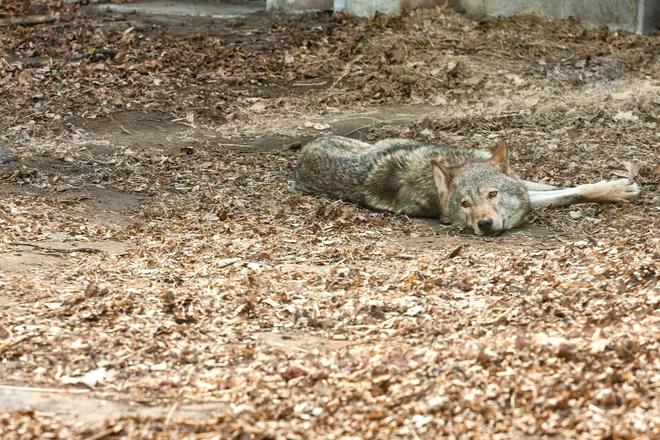 Що подивитися в Черкасах: унікальна експозиція з хижими тваринами