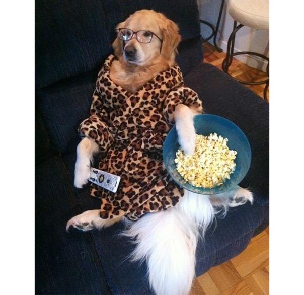 Собака живет как человек