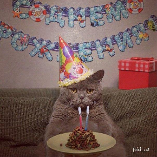 Смешные поздравления от котов 107