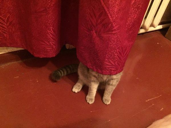 Никогда не играйте в прятки с котом. У вас нет шансов на победу.