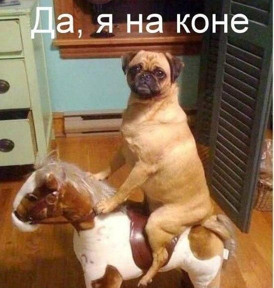 Суровый рыцарь на коне