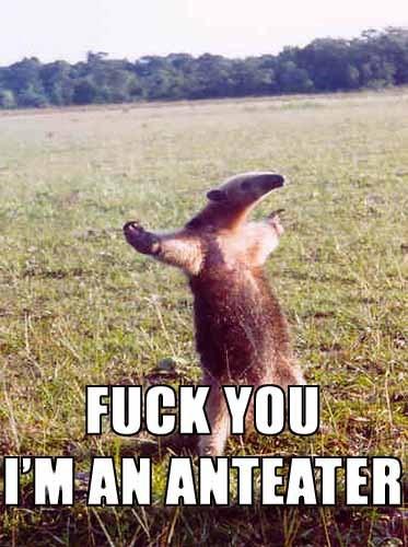 Я - муравьед!