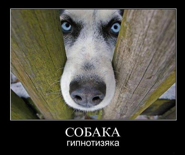 ТОП лучших собак