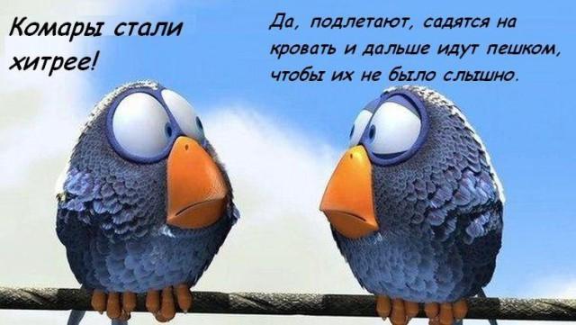 Мемы с птичками