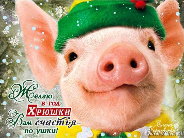 Милые открытки С Новым годом свиньи