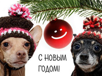 Классного года собаки 2018