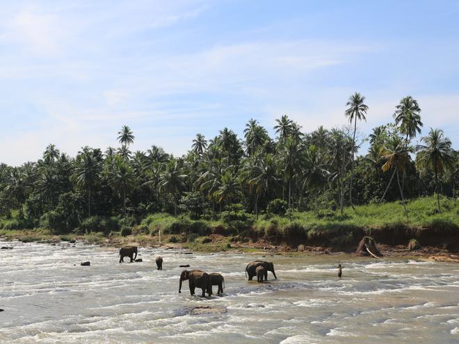 Дмитро Каднай про Шрі-Ланку: все, що ви не прочитаєте в путівнику про острів