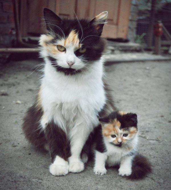 Маленькие копии родителей