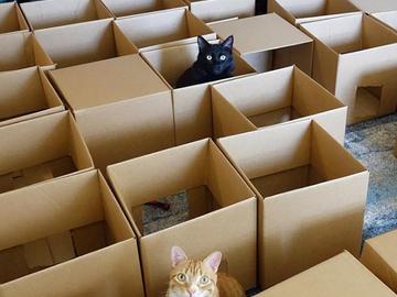 Американский блогер построил своим котам лабиринт из 50 коробок (видео)