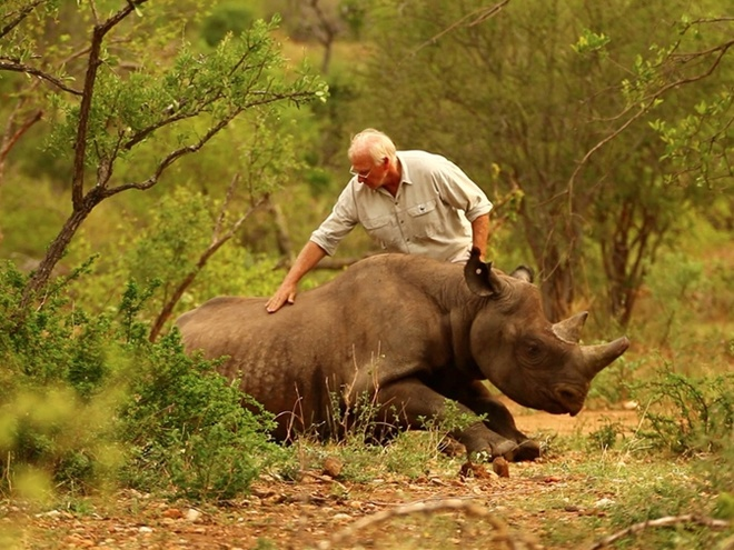 как летают носороги