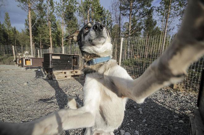 Собаки, які люблять Селфі