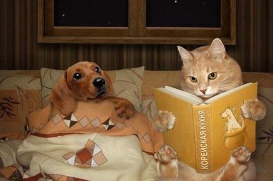 Котэ, почитай мне сказку!
