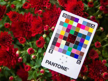 Головні кольори 2021 за версією Інституту кольору Pantone