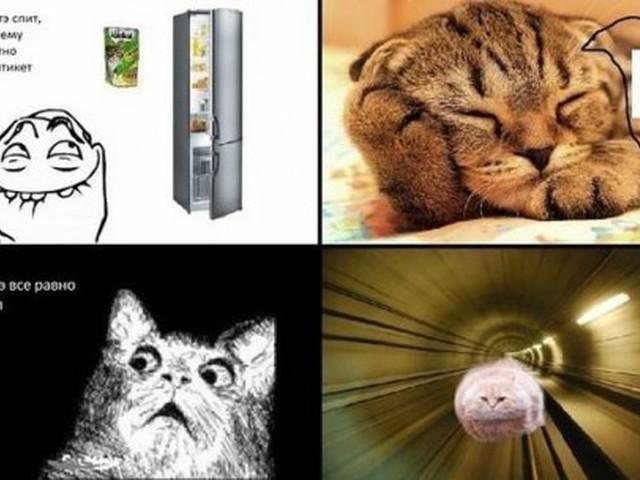 Картинки мемы приколы про котов