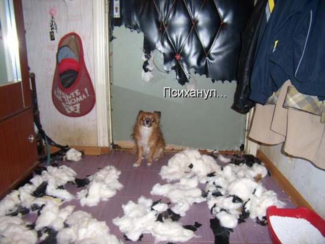 Кот психанул картинки