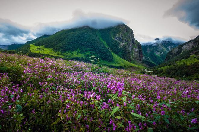 Фотопутешествие: Долина цветов в Индии