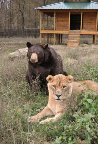 Необычная семья:)))