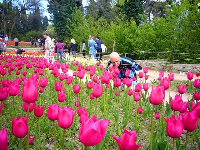 Тюльпаны в Никитинском ботсаду