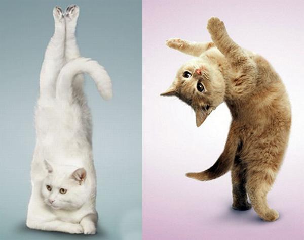 Легкая йога с котами
