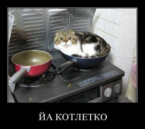 Демотиваторы про котиков