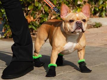 Обувь для собак UGG