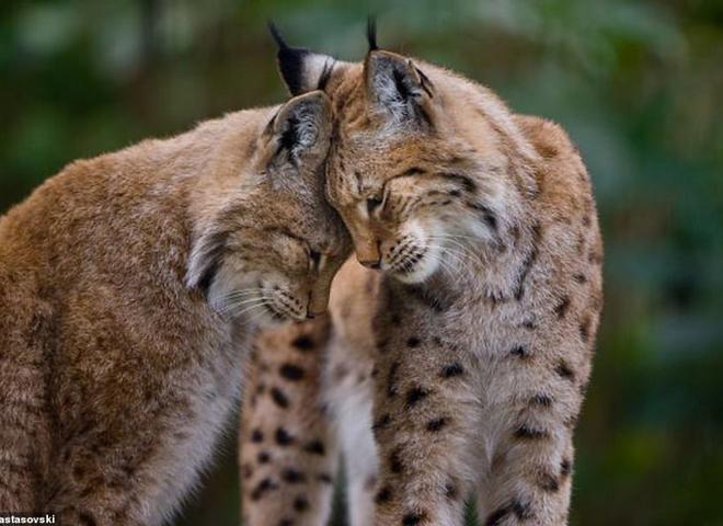 Любовь у животных