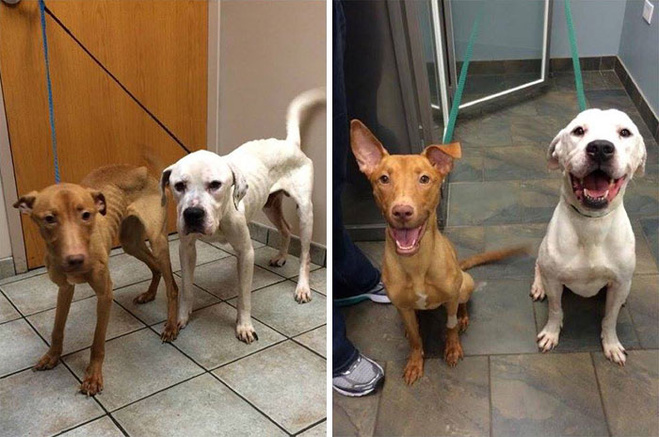 Бездомні собаки Оскар та Еммі