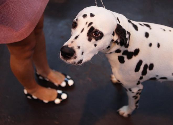 Топ-10 самых модных собачек
