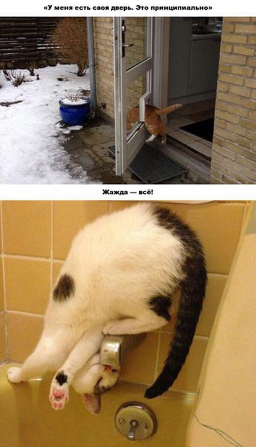 Железная логика котов