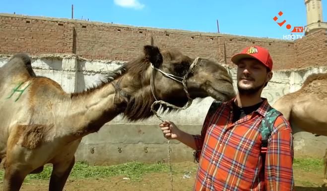 Чому не варто кататися на верблюді в Єгипті: досвід ведучих тревел-шоу