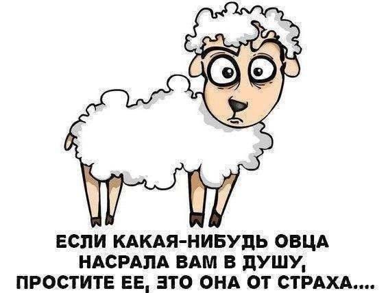 Смешная картинка про овцу