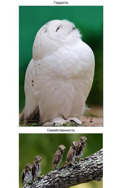 Широкий спектр качеств сов