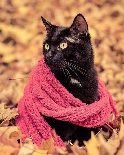 Осень - не повод грустить. Осень - это повод носить шарфик