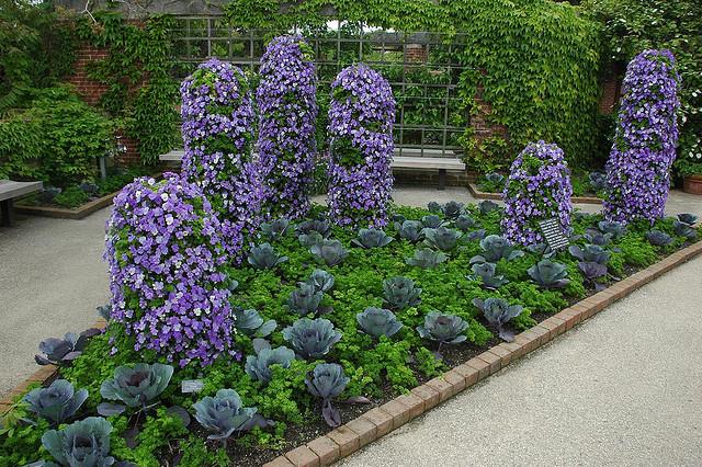 квіти в городі