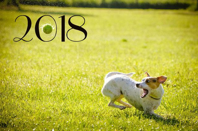 Яркого Нового года собаки 2018