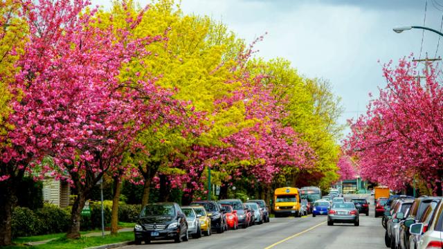 ТОП-5 найкрасивіших весняних міст