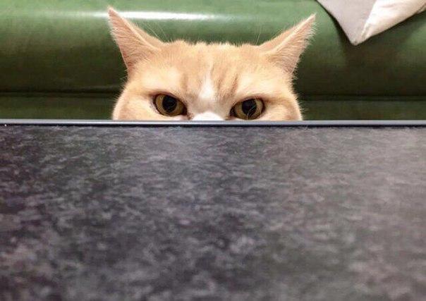 Котик, который полностью передаёт моё состояние