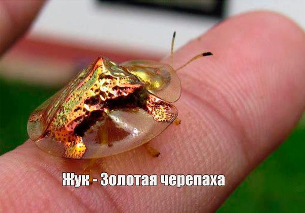 Самые необычные существа в природе