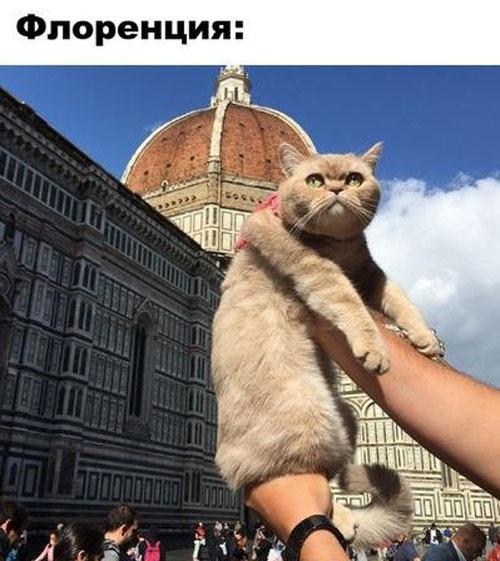 Кот, который путешествует больше тебя!
