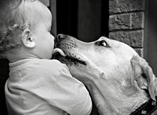 Детки и их любимцы