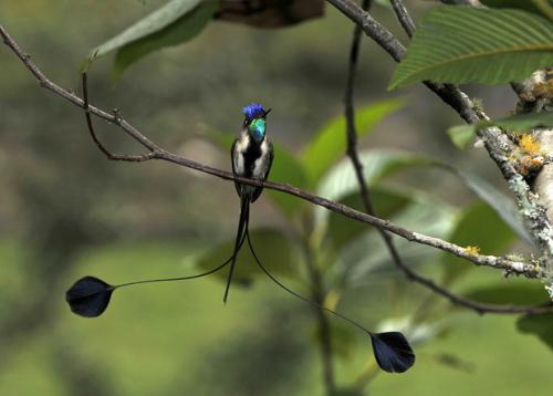 Самые редкие птицы