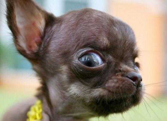 смешная собака фото