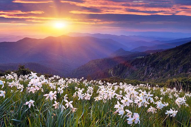 ТОП-7 найкрасивіших квіткових долині світу