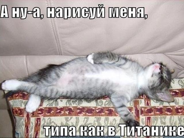 коты титаник фото любовником прямо
