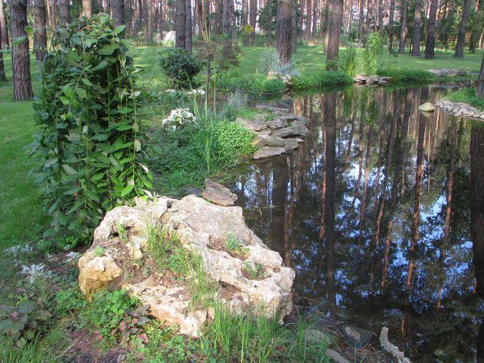 Ділянка в сосновому лісі