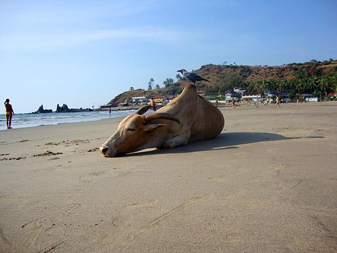 Курорти Гоа: Арамболь