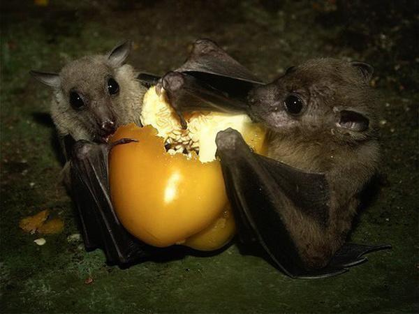 Летучие мышки в милой подборке